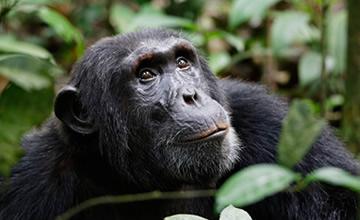 5 Day Rwanda Primates Safari