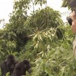 gorilla trekking in Rwanda virunga volcanoe area