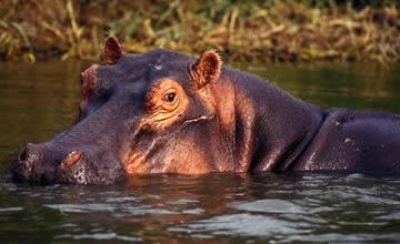 10 Uganda Rwanda Congo Gorillas